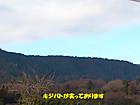 Kijibato1