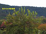 Kijibatoki_2
