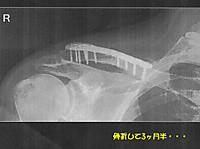 Sakotsu1_2