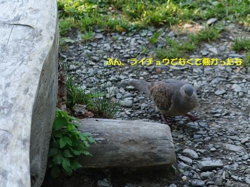 Kijibato_20190803165501