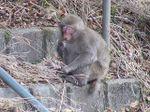 Monkey_1_2